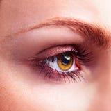 Yellow eye Royalty Free Stock Images