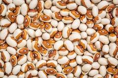 Yellow eye bean background Stock Photography