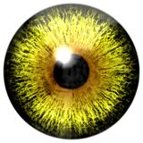 Yellow eye texture stock photo
