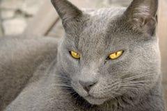 Yellow eyed beauty Stock Photo