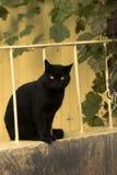 Yellow Eyed Black Cat Stock Image