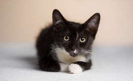 The yellow-eyed, black cat watching. Royalty Free Stock Photos