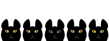 Yellow eyed black cats and a green eyed black cat.  Royalty Free Stock Image