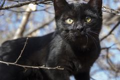 Yellow-eyed black kitten on the branches of a tree. royalty free stock image
