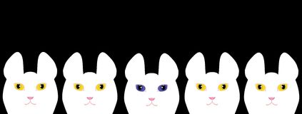 Yellow eyed white cats and a blue eyed white cat.  Royalty Free Stock Images