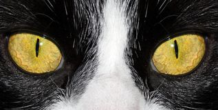 Yellow eyes Stock Images