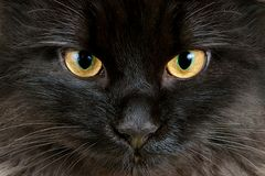 Yellow eyes of black cat close-up Stock Photos