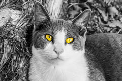 Yellow eyes Stock Photography