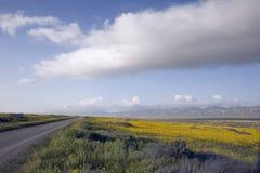 yellow för 01 fält Arkivbild