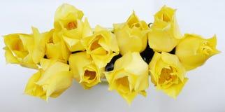 yellow för 13 tulpan royaltyfri fotografi