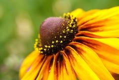 yellow för 2 blomma Royaltyfria Bilder