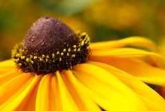 yellow för 5 blomma Arkivbilder