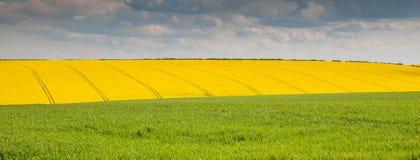 yellow för blå green Arkivfoto