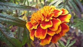 yellow för blommagräsgreen arkivbild