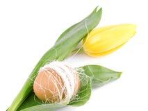 yellow för easter äggtulpan royaltyfri foto