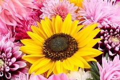 yellow för modell för hjärta för blommor för fjärilsdroppe blom- Arkivfoto