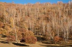 yellow för skoglutningssolnedgång arkivbild