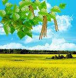 yellow för sommar för rapeseed för fältliggandepanorama Arkivfoton