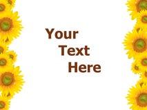 yellow för tema för sommar för bakgrundsblommafjäder Fotografering för Bildbyråer