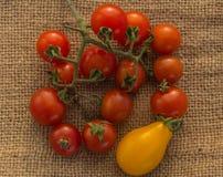 yellow för tomater för Cherryred Royaltyfri Bild