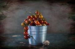 yellow för tomater för Cherryred Arkivbild