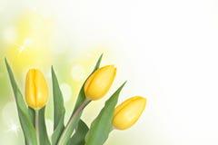 yellow för tre tulpan Fotografering för Bildbyråer