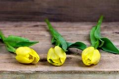 yellow för tre tulpan Arkivfoto