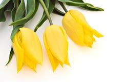 yellow för tre tulpan Arkivfoton
