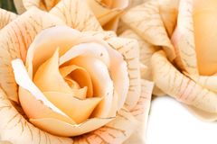 Roses. Yellow fabric roses closeup picture Royalty Free Stock Photography