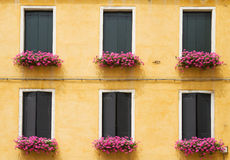 Yellow facade with pink flowers. Stock Image