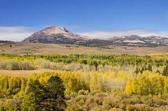 Yellow Fall Aspen Trees. Near Conway Summit in California Stock Photos