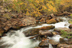 Yellow fall color by a stream in the Utah mountains. Royalty Free Stock Photos
