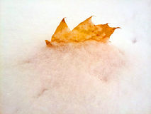 Yellow fall leaf in the winter snow. Yellow leaf sticking out of the snow in wintertime Stock Images