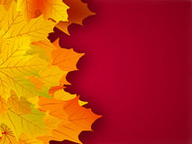 Yellow fall leaves on a red background. Royalty Free Stock Images