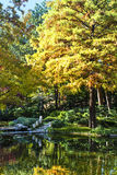 Yellow Fall Tree. Yellow Autumn Tree over Pond stock photography