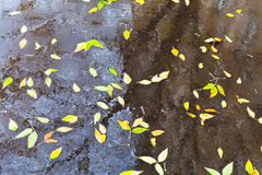 Yellow falled leaves in rain urban puddle Stock Photography