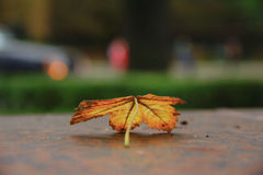 The yellow fallen-down leaf Royalty Free Stock Photos