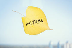 Yellow fallen leaf labeled Sep stuck to the window Royalty Free Stock Images