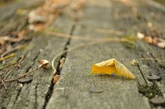 Yellow fallen leaf on old wooden table Royalty Free Stock Photo
