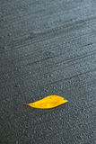 Yellow Fallen Leaf on Wet Cold Pavement Royalty Free Stock Image