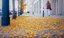 Yellow fallen leaves on cobblestones Royalty Free Stock Images