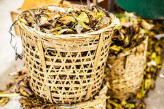 Yellow fallen leaves Royalty Free Stock Images