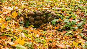 Yellow fallen leaves on the ground Royalty Free Stock Image