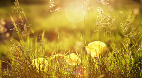 Yellow fallen leaves lie on the grass Stock Photos