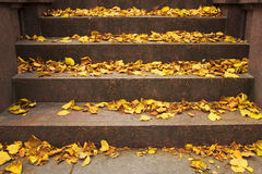 Yellow fallen leaves. Lie on the stone steps of the monument Royalty Free Stock Image