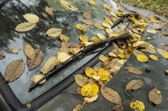 Fallen leaves lie on the windshield of the car and under the hoo. Yellow fallen leaves lie on the windshield of the car and under the hood Royalty Free Stock Images