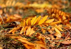 Yellow fallen leaves in October - autumn in the nature royalty free stock photography