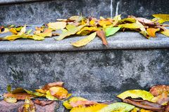 Yellow falling leaves on granite steps on autumn time.  stock image