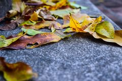 Yellow falling leaves on granite steps on autumn time Stock Photo