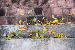 Yellow falling leaves on granite steps on autumn time Royalty Free Stock Photos